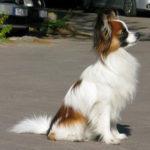 Bandit (Therapiehund)